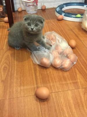 gato-flagra14