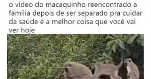 maca22