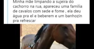 cavalomang1