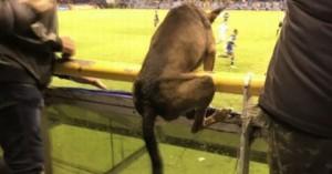 cachorro voador jpppssss