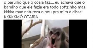 coala3des