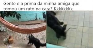 ratonacarades