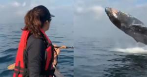 baleia2des