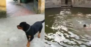 cachorro afogado2des