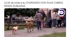 cabras12
