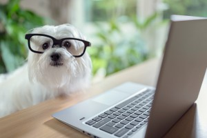 Dog with glasses using laptop computer