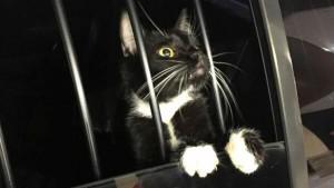 gato-preso