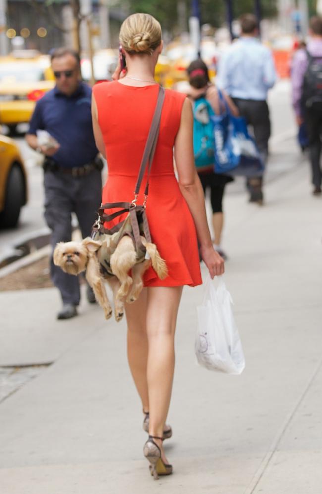 Bolsa Para Levar Cachorro Na Bicicleta : Bolsa para carregar cachorro ? alternativa ?s caminhadas