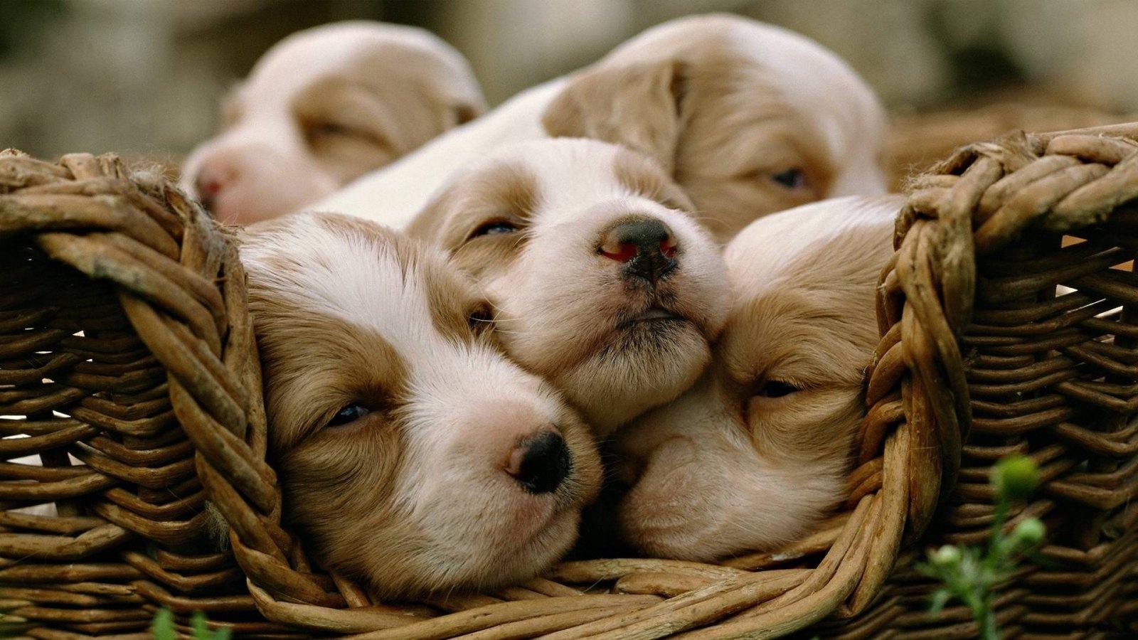 cachorrinhos-9