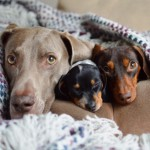harlow-sage-indiana-reese-cute-dog-photos-10-605x605