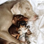harlow-sage-indiana-reese-cute-dog-photos-15-605x605
