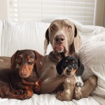 harlow-sage-indiana-reese-cute-dog-photos-18-605x605