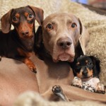 harlow-sage-indiana-reese-cute-dog-photos-19-605x605