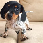 harlow-sage-indiana-reese-cute-dog-photos-221