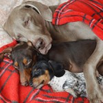 harlow-sage-indiana-reese-cute-dog-photos-3-605x605