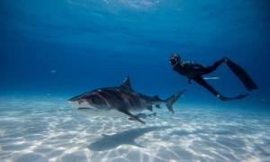 102_1416-blog-sharks-01