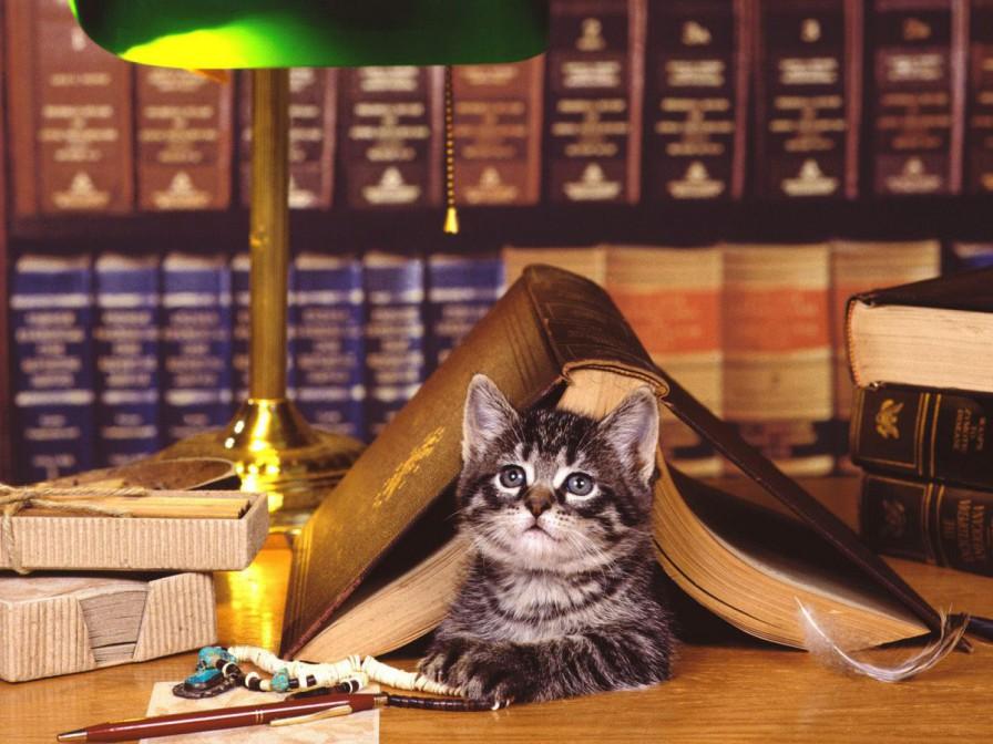 gatos inteligentes mundoidao