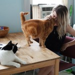 mulheres-gatos16
