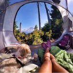 campingwithdogs10