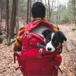 campingwithdogs14