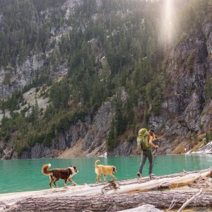 campingwithdogs3