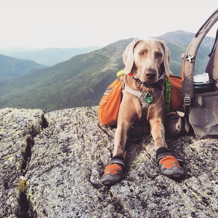 campingwithdogs5