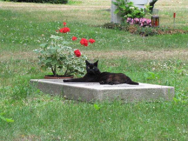 cemiterio-de-animais-03