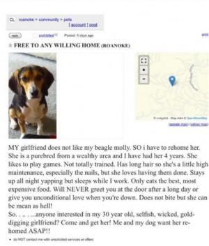 anuncio-beagle