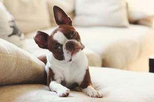 cachorro_inclina_a_cabec_a_2
