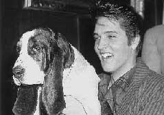 Elvis e um Basset Hound: sucesso nas paradas/Reprodução/Hulton Getty Collection