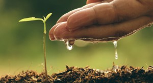 Dia-agricultura-água-panta